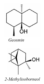 Geosmin and 2-Methylisoborneol (2-MIB)